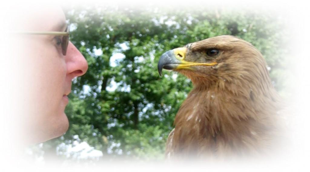 Eagle fade